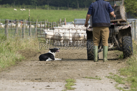 farmer with quad bike and sheepdog