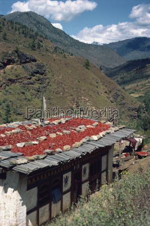tur rejse bjerge asien landbrug agerbrug
