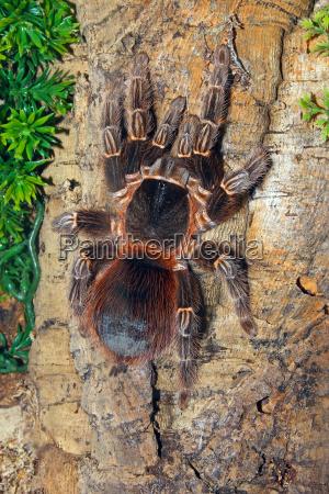 makrooptagelse naerbillede insekter dyr haret edderkop