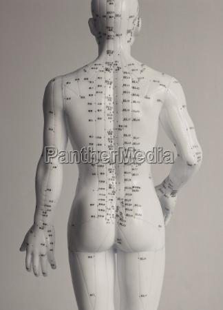 akupunktur point kinesisk medicin