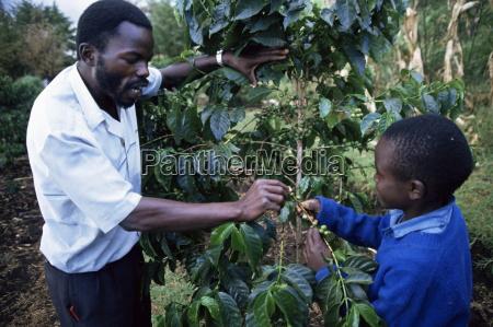 skoleborn laerer om kaffe kenya ostafrika