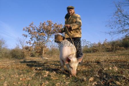 troffel producent med svin soger efter