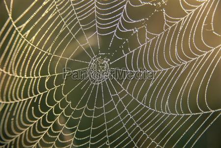 tidlig morgen dug pa edderkoppespind derbyshire