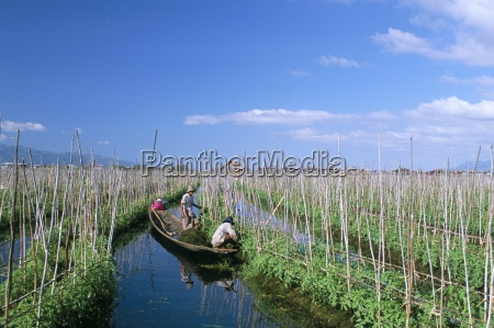 tomato floating fields inle lake shan