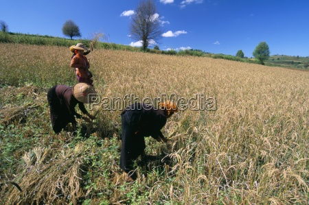pa o women working in fields