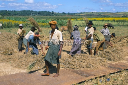 farm workers road to pindaya shan
