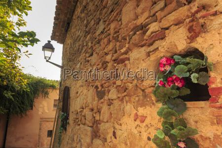 smuk middelalderlig landsby geranium med pink