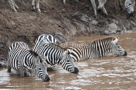 afrika kenya maasai mara national reserve