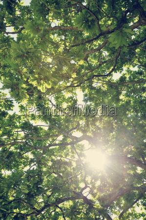 arbol arbol de hoja caduca suecia
