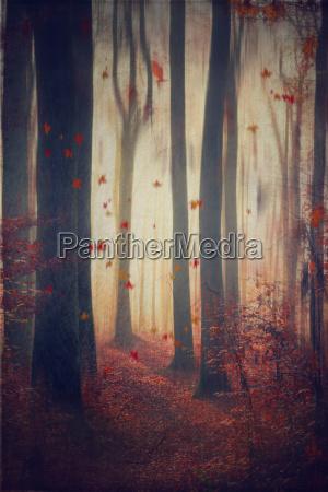 faldende blade i efterarsfarver skoven