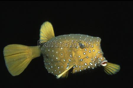 makrooptagelse naerbillede fisk horisontal undersoisk fotografi