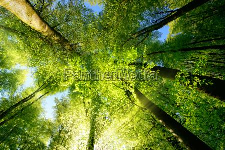 rays of sunlight beautifully illuminating treetops