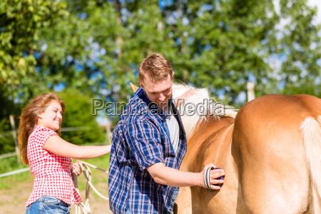 couple combing horse on pony farm