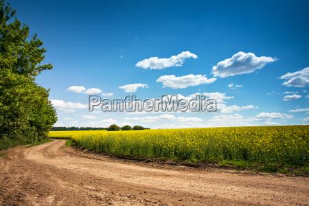 dirt road i blomstrings omradet smukke