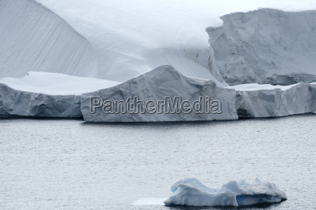 calving glacier and large icebergs at