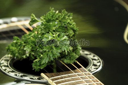 guitar with parsley