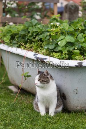 katze sitzt vor einer upcycling badewanne