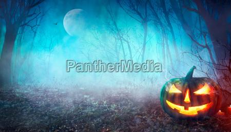 halloween spooky skov