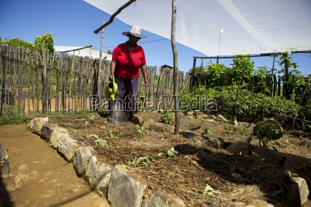 a female farmer watering her vegetables