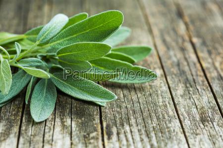 mad levnedsmiddel naeringsmiddel fodevare blad sundhed
