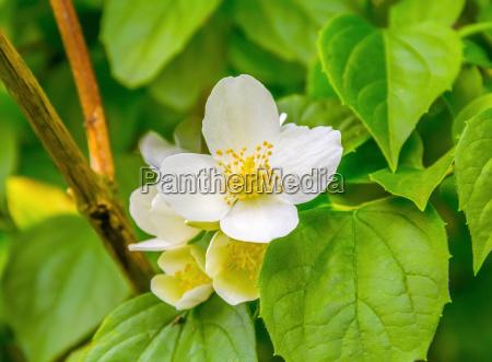 blad detalje closeup close up blomst