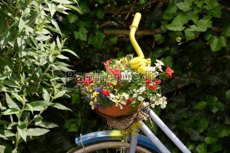 have hjul blomst blomster plant plante