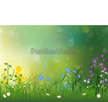 spring background with colorful flowers