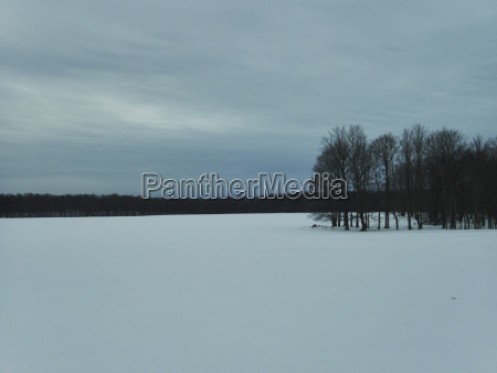 bare trees on snowy field against