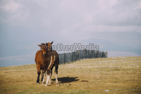 horses standing on field against cloudy