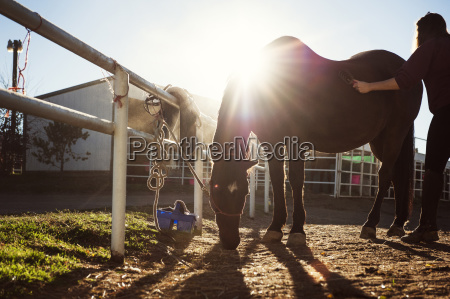 woman brushing horse on ranch during