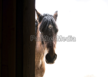portrait of horse standing by door