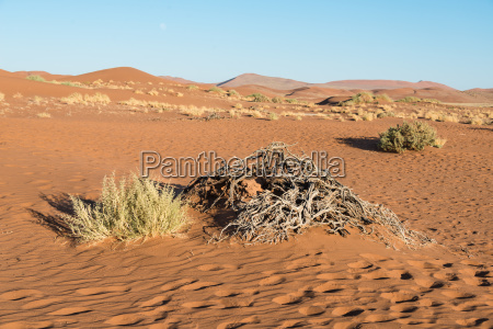 orken afrika namibia sevaerdigheder graesser sevaerdighed