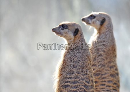 dyr fauna vagtsom arvagen sevaerdigheder europa