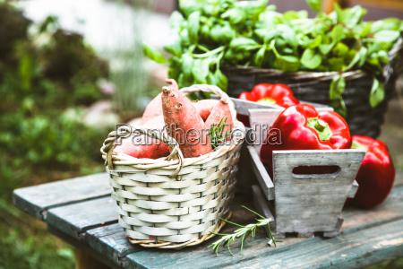 friske grontsager pa trae