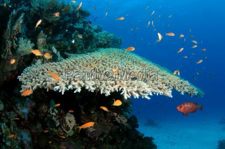 eksistens liv bestaen levende life fisk