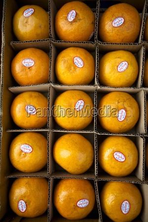 appelsin mad levnedsmiddel naeringsmiddel fodevare frugter