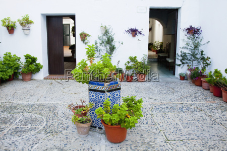 variety of plants in containers in