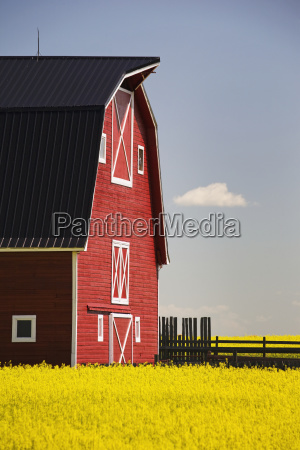 front of a red barn in