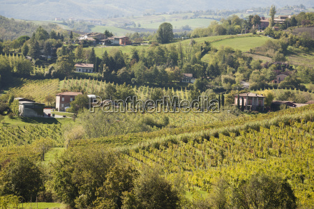 rolling hills of vineyards and farm