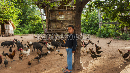 lanten, dreng, fodring, dyr;, luang, namtha, laos - 25498056