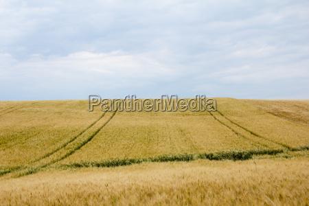 kornmarker med baner og horisont i