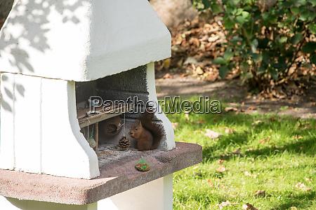 fodring jorden for fugle og egern
