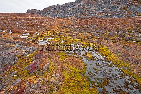 efterarsfarver pa et arktisk vadomrade