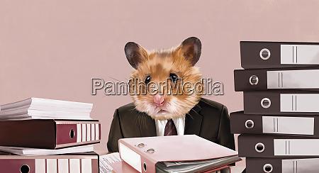 hamster businessman sitting at desk with