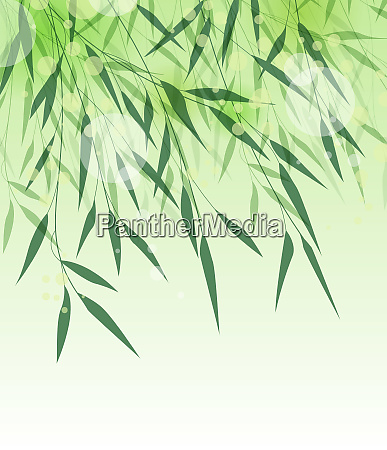 bambus gront blad