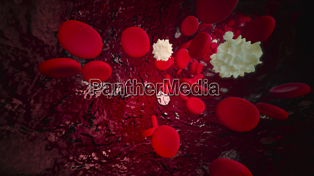 white and red blood cells flowing