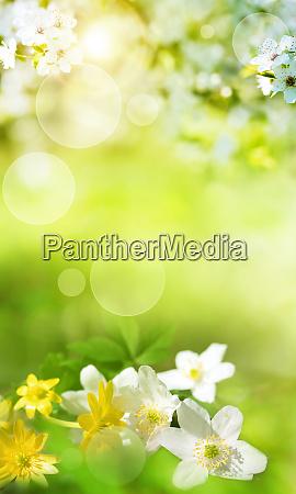 forarslandskab med sma blomster