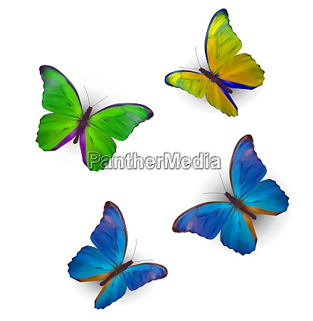 butterfly set isolated on white realistic