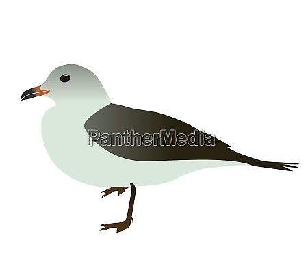 seabird seagull isolated on white background