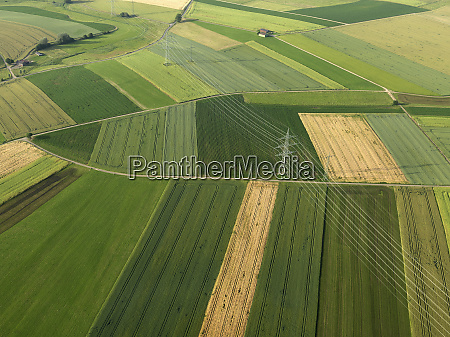 aerial view vibrant green agricultural crops
